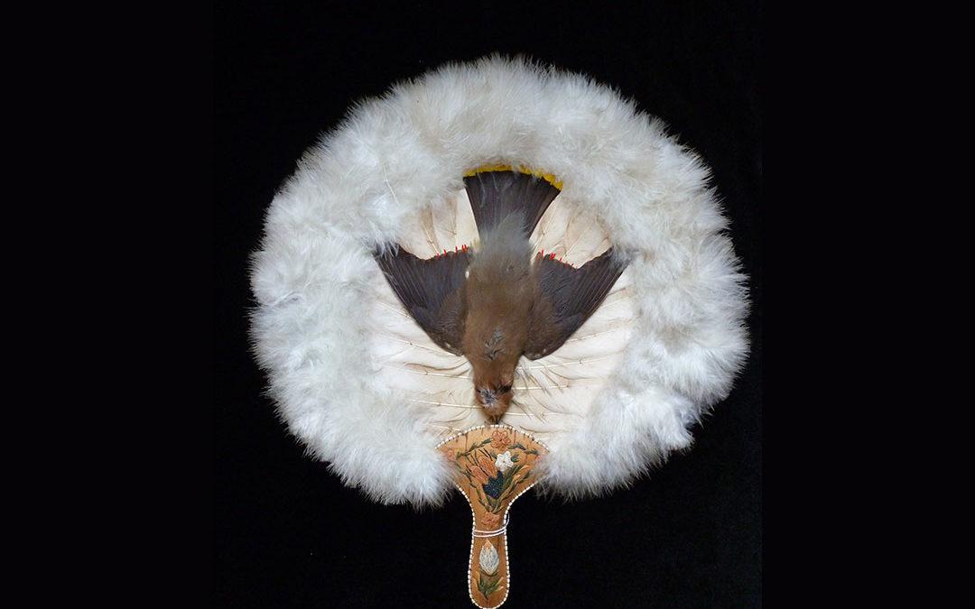 Dépouille d'oiseau sur écran de plume